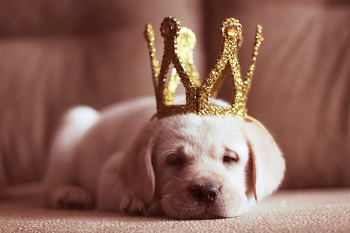 All hail King Puppy!
