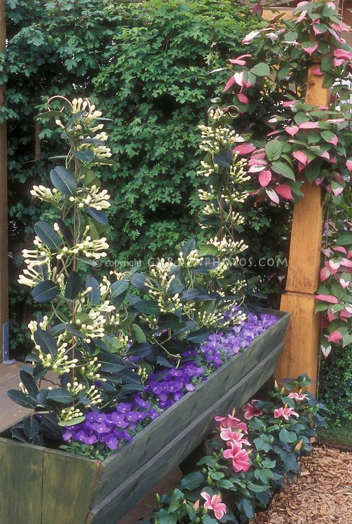 202 best images about climbing vines on pinterest moonflower arbors and flowering vines - Pergola climbing plants under natures roof ...