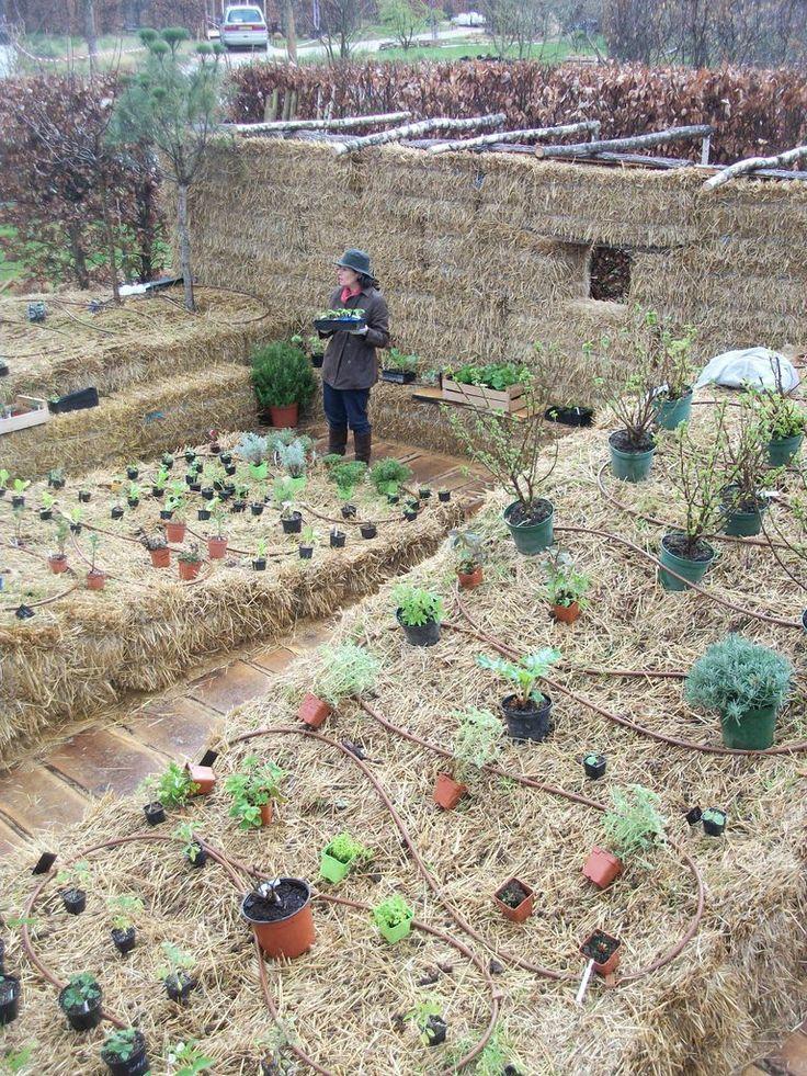 Straw bale gardening: Gardens Ideas, Straws Bale Gardens, Straws Gardens, Gardens Inspiration, Gardens Goddesses, Bale Gardens Un, Gardens Un Paysag, Gardens Yard, Gardens Natural