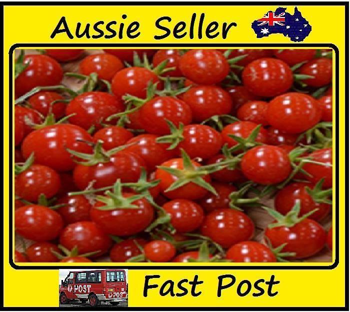 100 Pcs Red Cherry Tomato Seeds Organic Heirloom Easy Grow Garden Plant.