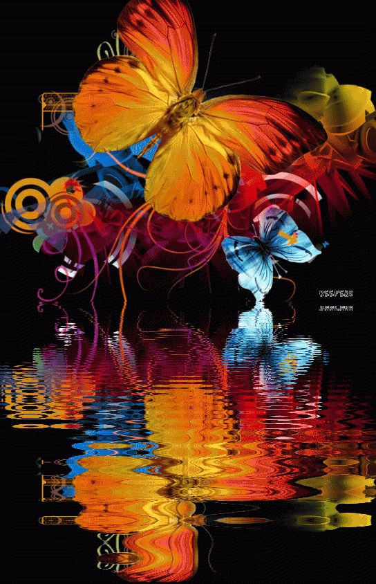 animated butterfly gif | ... Color Splash, Animated Gifs, Animated Gif, Animated Graphics, Keefers