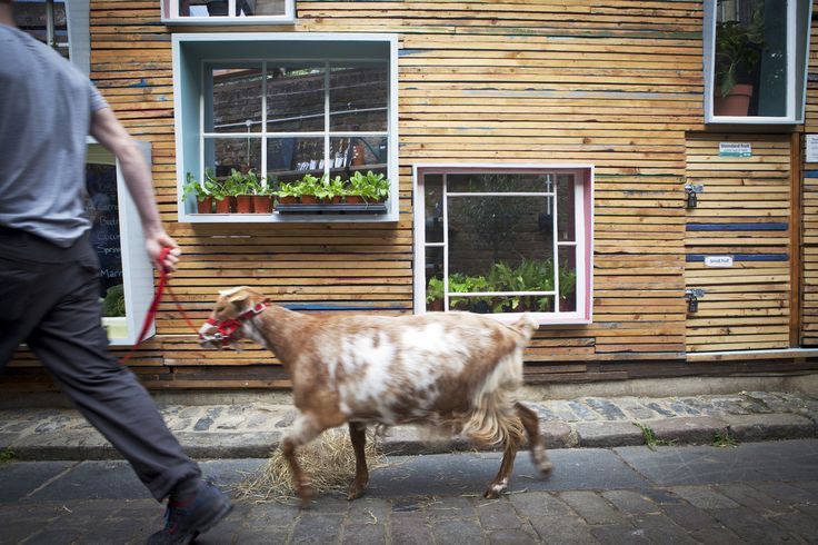 """""""Sill to Sill Farm shop"""" progetto vincitore di notch collettivo di design, bando promosso da Hackney City Farm di Londra. L'obiettivo è stimolare sul tema dell'agricoltura urbana. Un nuovo negozio per frutta e verdura realizzato con materiali di riciclo. La finestra come elemento distintivo di questo progetto, con funzione di panche, tavolini e ripiani. Bel esempio di ecoarchitettura-social-ambiente.Bel esempio di ecoarchitettura-social-ambiente."""