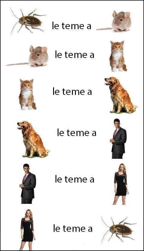 Spanish jokes for kids, chistes infantiles #Jokes in Spanish #Spanish humor