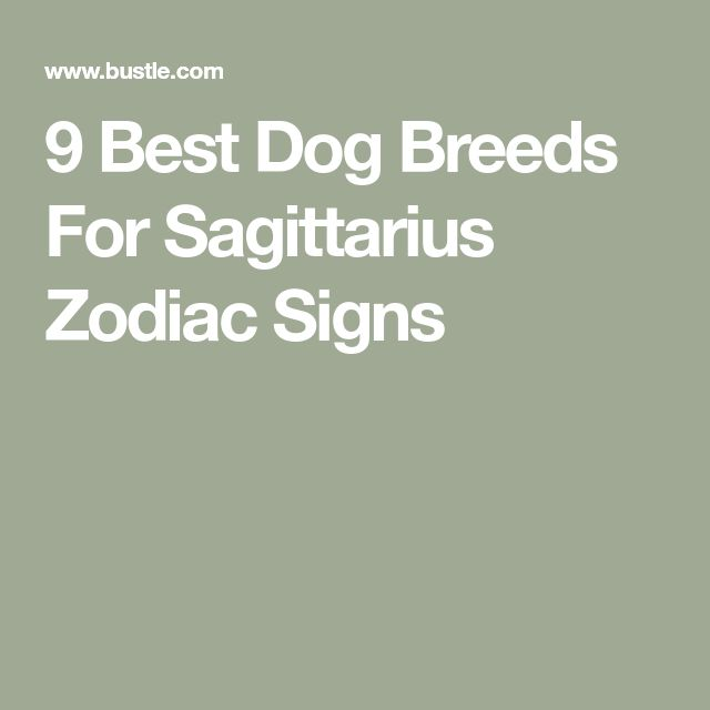 If You're A Sagittarius, These Are The 9 Best Dog Breeds For You