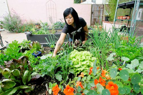 Ways that do not deplete the hobby of gardening bag, Everyone would be willing to spend a lot of money on their hobby. Even a fairly simple gardening hobby can also drain money if too obeyed.