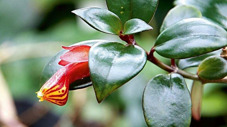 Zajímavé pokojové květiny | Nápady jedné babči