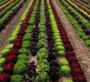 Profitable Cash Crops You Can Grow At Home