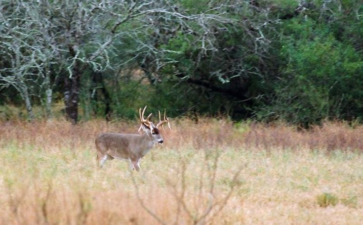 Featuring a diverse habitat, Texas's Lazy A Ranch is home to abundant whitetail deer along with healthy populations of turkey, dove, and quail. Located less than three hours from downtown #Houston, this 3,238-acre #ranch is surrounded by only four neighbors, each with at least 5,000-acres, and offers multiple water features, including some three miles of river frontage on the Arkansas River.