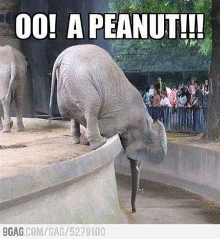Funny animals w/ captions