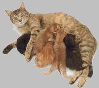 01 Feline Distemper (Panleukopenia) - VeterinaryPartner.com - a VIN company!