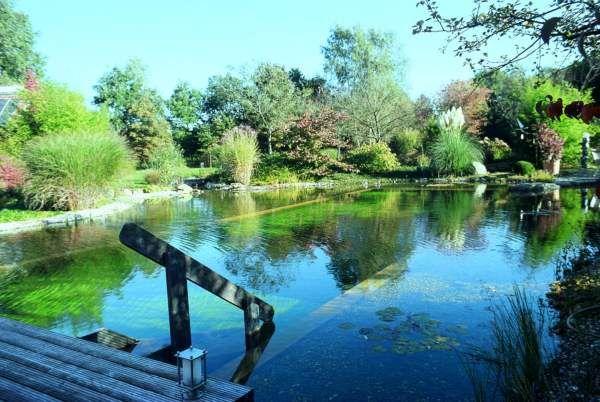 1000 ideas about bassin aquatique on pinterest plantes for Construction piscine bergerac