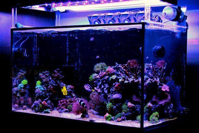 All In One Saltwater Aquarium Kit The 5 Best Starter Packages Of 2019 Saltwater Fish Tanks Diy Fish Tank Cool Fish Tanks