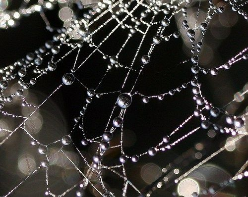 oh what a tangled web by jenny downing  Soul purpose and learning to integrate