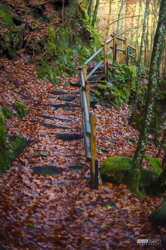 nice forest path autumn GERMANY hiking --  die Buchberger Leite im Bayerischen Wald.