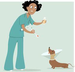 Female veterinarian giving a medicine to a dog in a cone collar, EPS 8 vector illustration, no transparencies