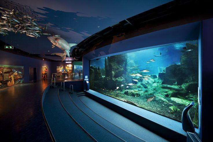 İstanbul Akvaryum için mekanın rengine göre üretilen bilgilendirme kioskları deniz canlıları hakkında ziyaretçilere ayrıntılı bilgi sağlayacak şekilde yapılandırıldı.