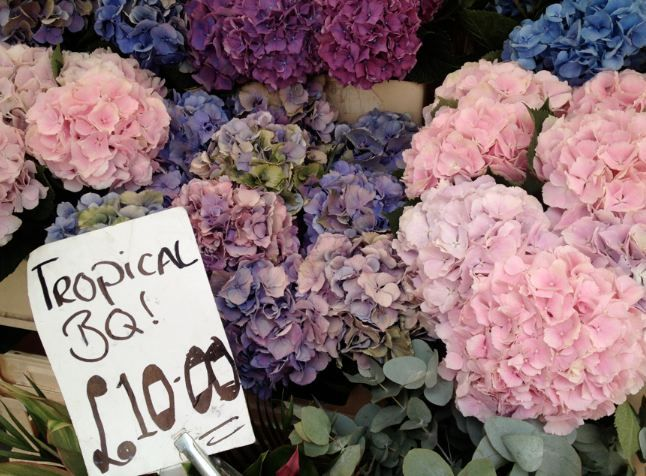 Pink and purple #flowers at Columbia Road Flower Market