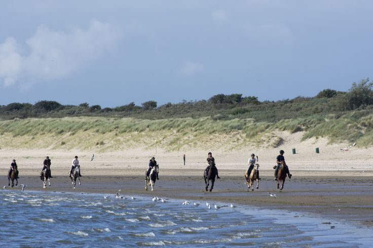 Love this beach rid where the ride based on natural horsemanship