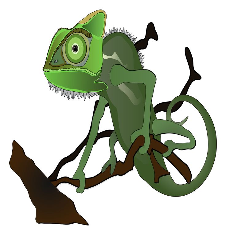 Green chameleon by lamatin