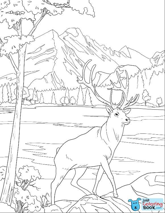 Mule Deer Coloring Page Free Printable Coloring Pages Pertaining To Printable Female Mule Dee Deer Coloring Pages Free Printable Coloring Pages Coloring Pages