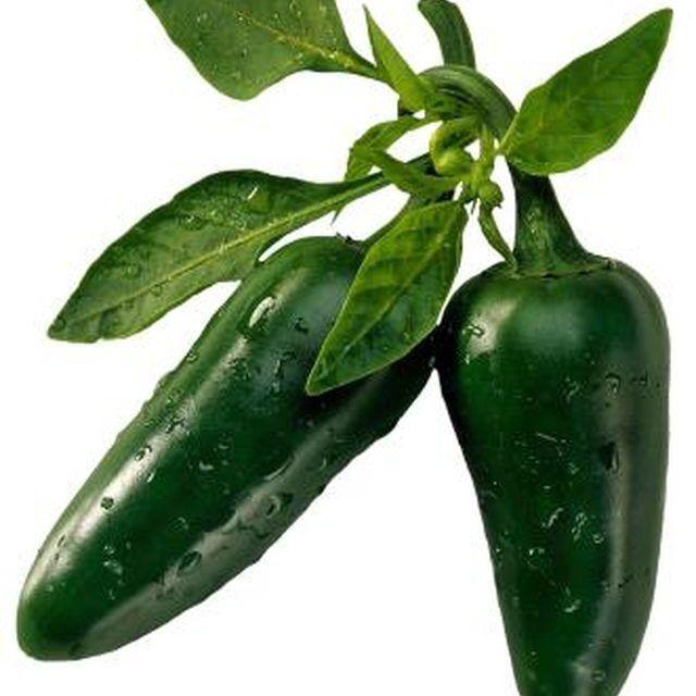 How Long Does a Jalapeno Plant Grow? | Hunker | Jalapeno ...