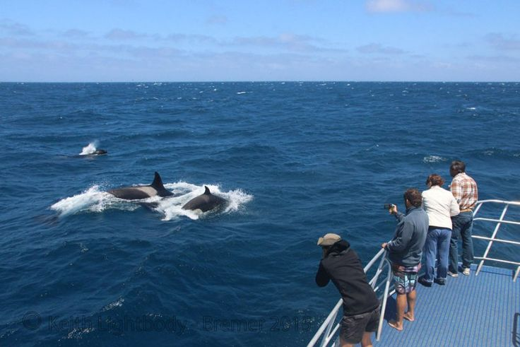 Bremer Canyon Orca Tours