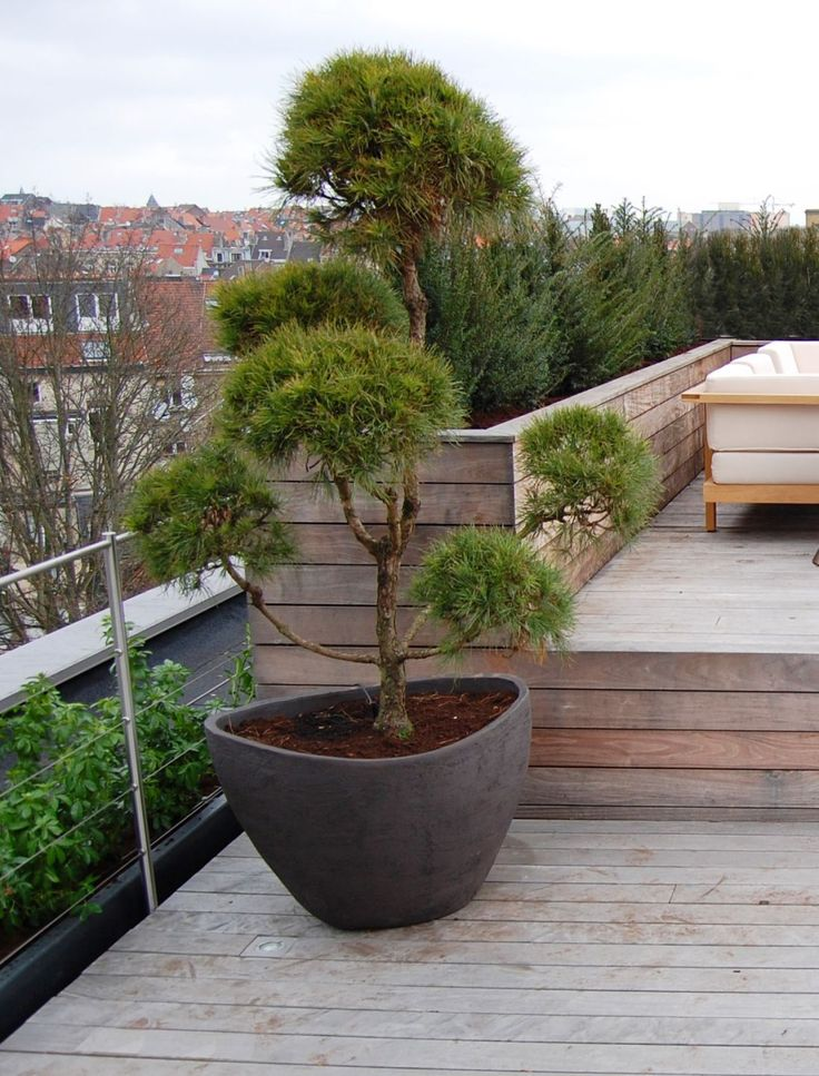 Love the blend of the rustic wood, stainless stanchions and cable, planters…