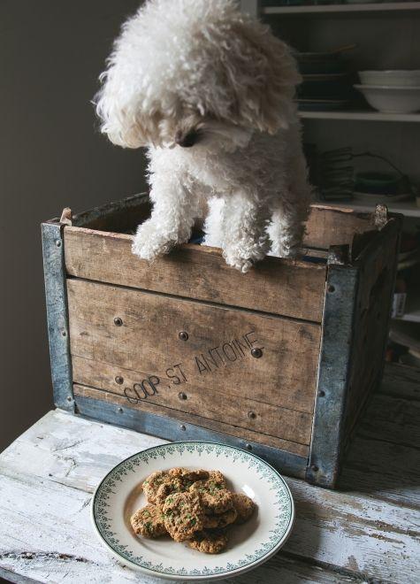 Biscuits pour chien- 3 fois par jour