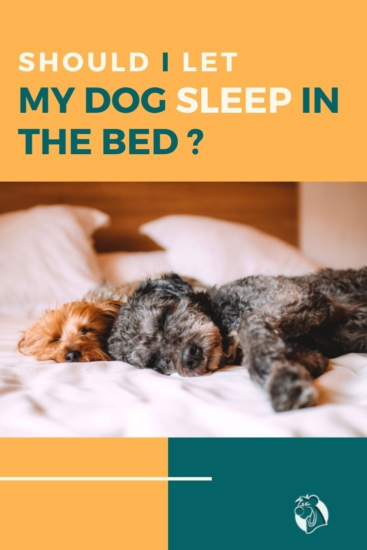 6fa45fbe34c8726a9bdf29f9f7c9c304 - How Do I Get My Puppy To Sleep In His Bed