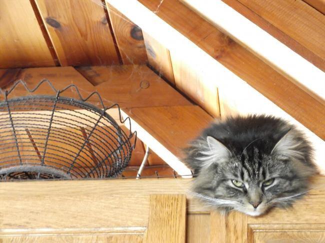 House Sitters Needed Nov 22, 2017 Micro Term Tweed Ontario Canada