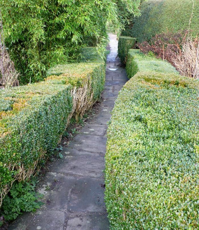 Best 25 Garden hedges ideas on Pinterest Hedges Boxwood hedge