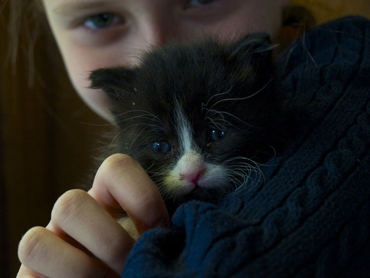 My best friend.... We found this cat in November under a bush in our backyard. She had just been born, and almost froze withour her mother (it is already winter in Montreal), we fed her from the nipple, now she already eats meat and any food like a regular cat. Her name is Zoe,,,