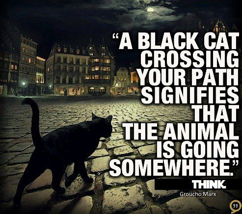 Quote A black cat crossing your path signifies that the animal is going somewhere