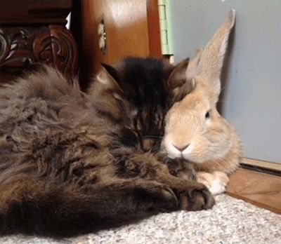 With Bunny | Funny Cat GIFs