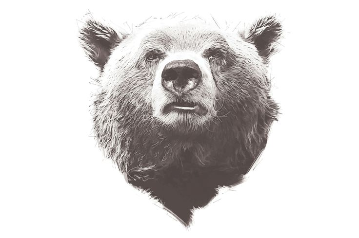Grizzly Bear Illustration by Digital Art Downloads on Creative Market