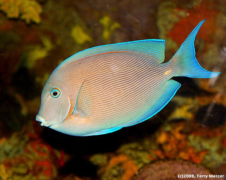 129 Best Images About Tropical Fish On Pinterest Fresh