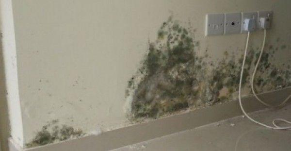 Μούχλα ΤΕΛΟΣ! Ένα απίστευτο κόλπο για να εξαφανίσετε τη μούχλα από το σπίτι σας.