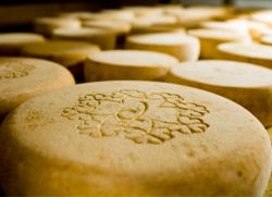 Old World vs BC cheese | bcliving