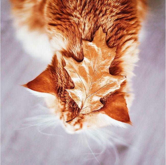Такой холодной осенью очень нехватает теплого, большого исолнечного кота