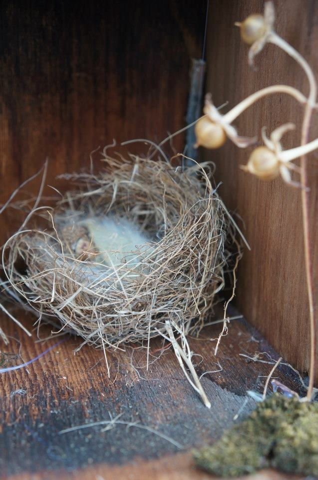 A Tiny Fairy Baby Nestles In Her Wren Nest Bed