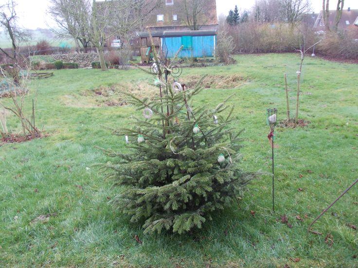 Weihnachtbaum, Kugeln ab, Futter für Vögel ran.