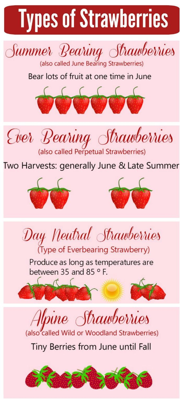 Types of Strawberry Plants