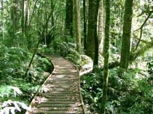 The boardwalk at Trounson Park. Dargaville, The kauri Coast