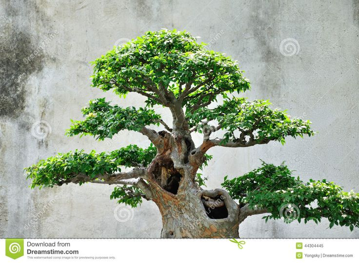 Backyard Bonsai Garden : Garden Bonsai Garden  Ideas for the House  Pinterest  Bonsai