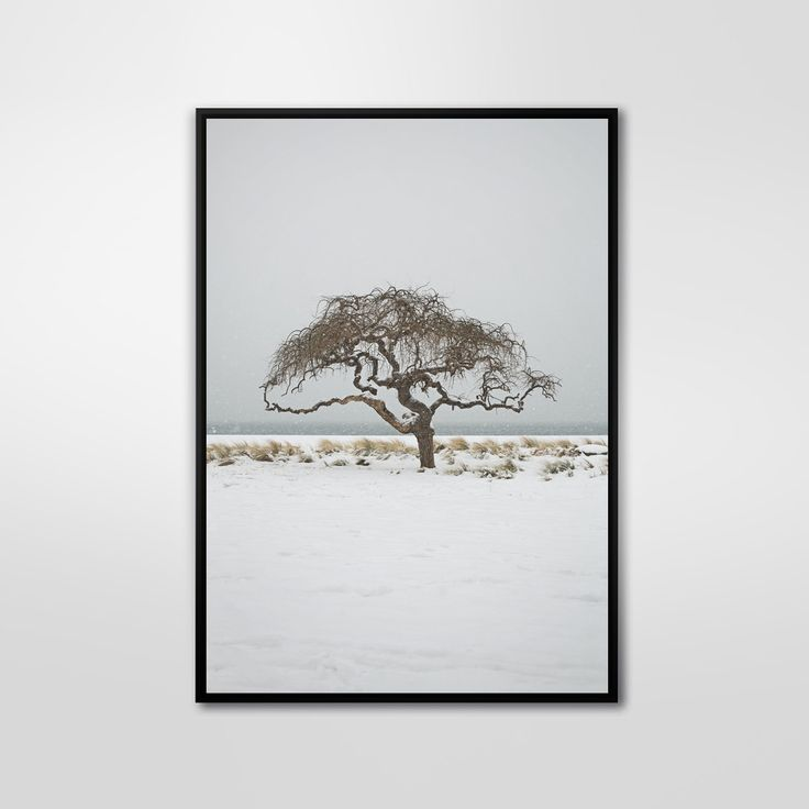 Solo Tree, Color Photography, Art Print, Wall Decor, Abstract Large Poster, Modern, Minimalist by PrintingDots on Etsy