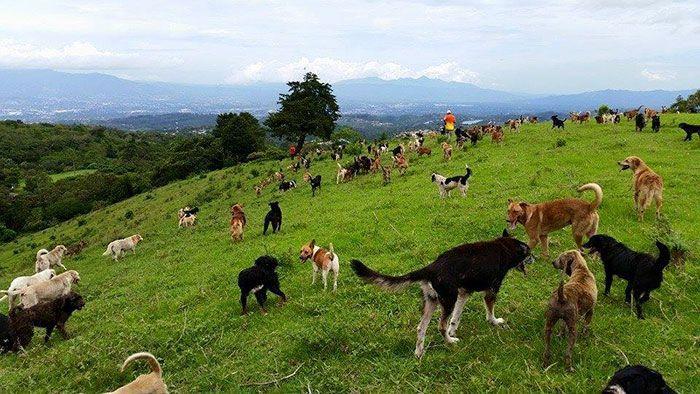 Собачий рай в Коста-Рике (8 фото)