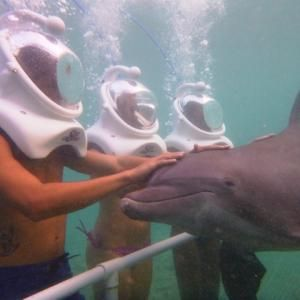 Dolphin Trek in Ocho Rios  Read the reviews of all the things to do and tips