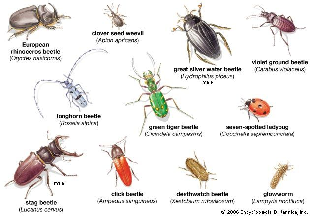 Insects Pictures And N...