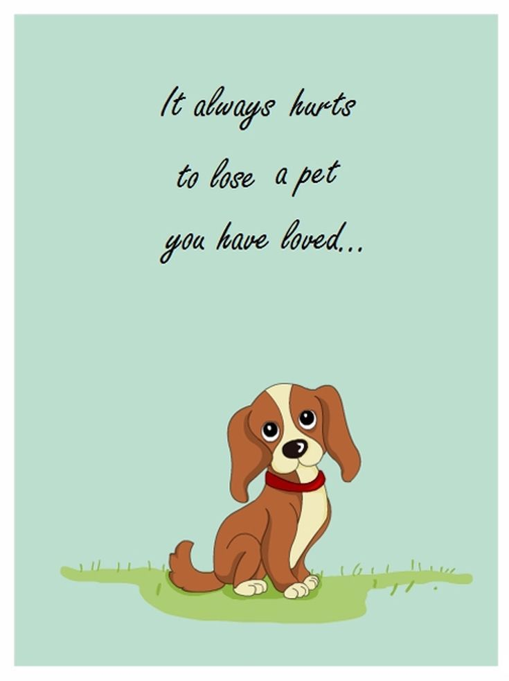 Crazy image with free printable sympathy card for loss of pet
