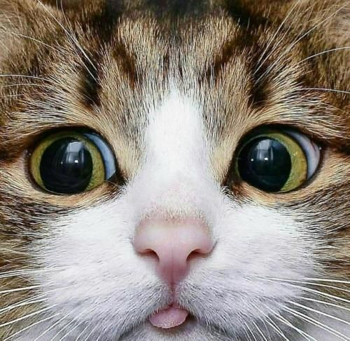 Dieser erstaunte Blick – KATZEN so süß und lustig, voller Geheimnisse – #astoni …